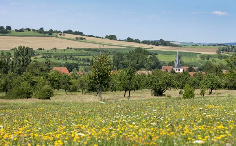 Pelouses sèches du Mortsberg