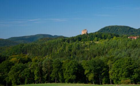 La forêt régionale du Fleckenstein associe exploitation raisonnée et naturalité