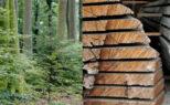 Une charte forestière pour valoriser le bois local