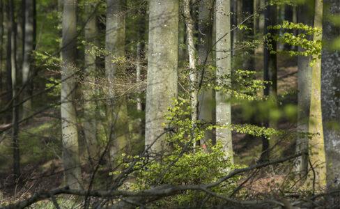 La forêt des Vosges du Nord : cap sur l'innovation