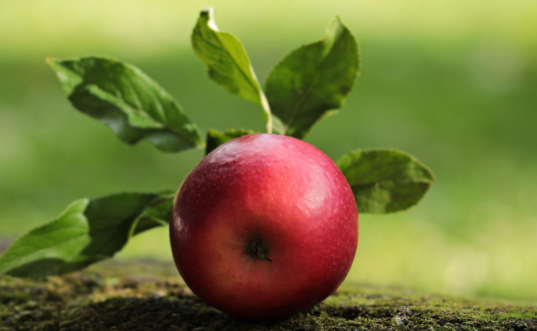 Exposition de fruits