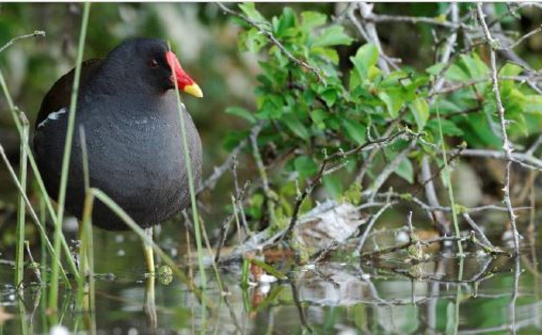A la découverte des oiseaux d'eau hivernants