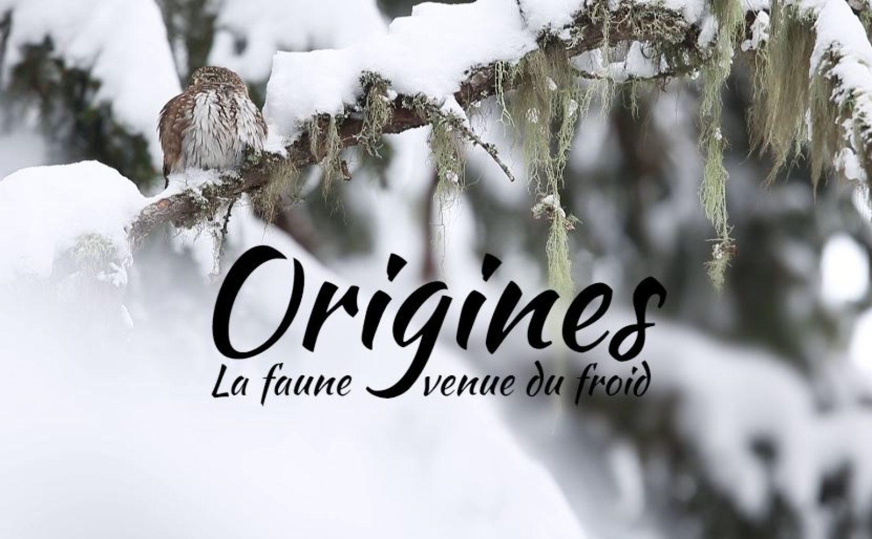 Ciné-débat : origines, la faune venue du froid