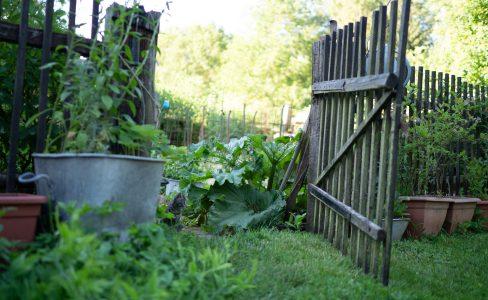 Jardiner pour la biodiversité : concours 2020