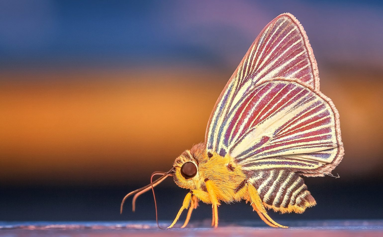 Une nuit avec les insectes